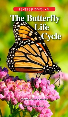 The Butterfly Life Cycle (1)